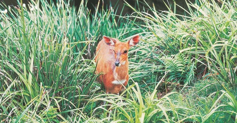 Zimbali contains a variety of buck