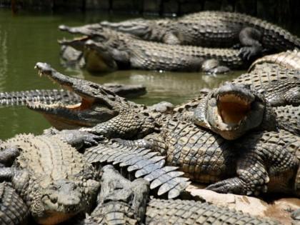 crocodile-farm-lrg