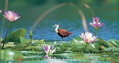 Zimbali has over 200 species of birds