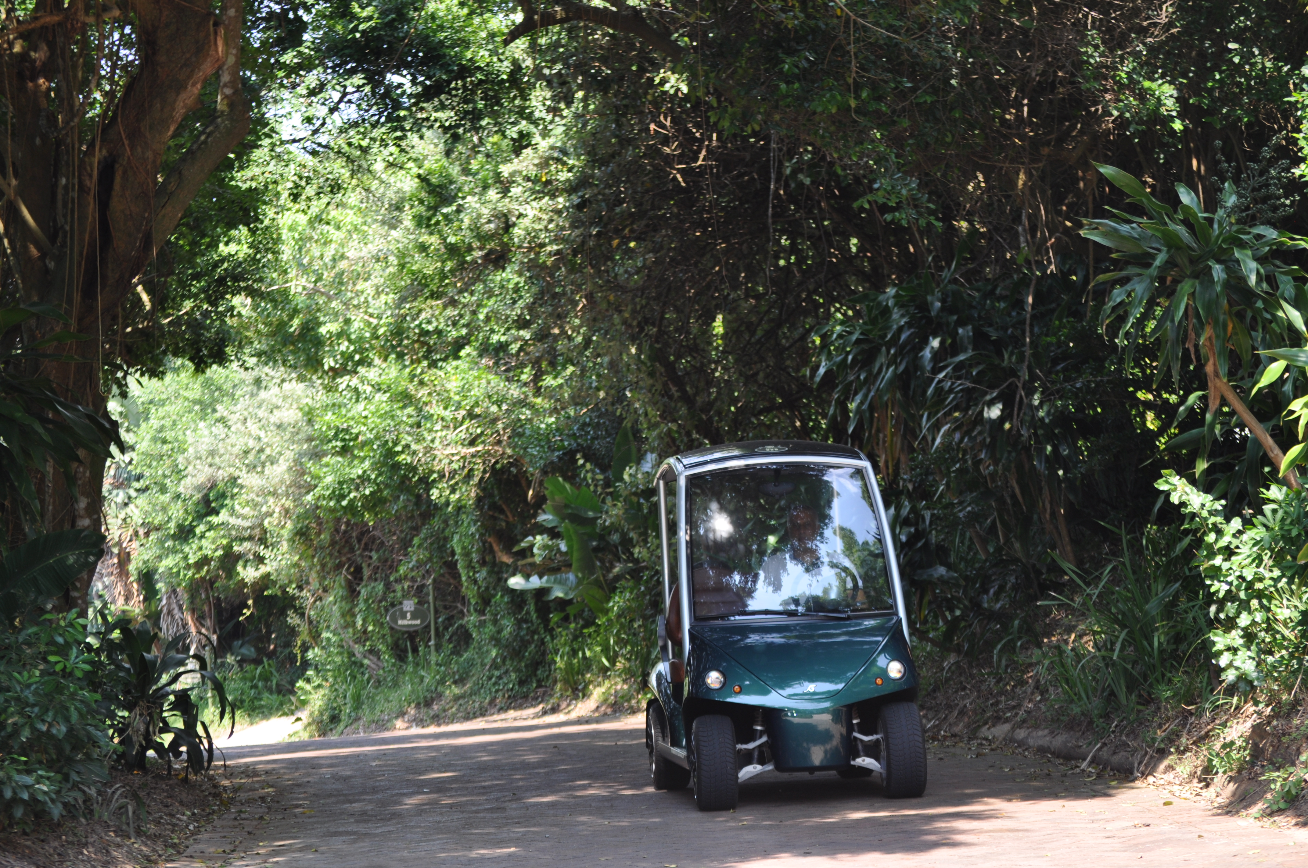 Golf-carting through the forest estate